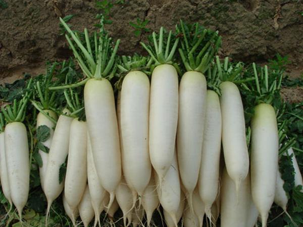 Ăn loại rau cải nào tốt cho sức khỏe?