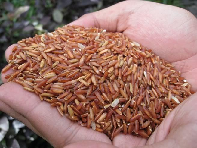 Cách điều trị bệnh thoái hóa cột sống bằng gạo lứt
