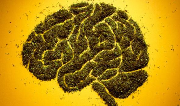 Khi ngủ, bộ não bạn có thể co lại 20%